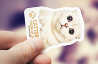 Cattery-Folds-of-Jem-cat-business-card-design-Web-thumbnail