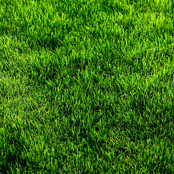 Premium Green grass patch textures (2)